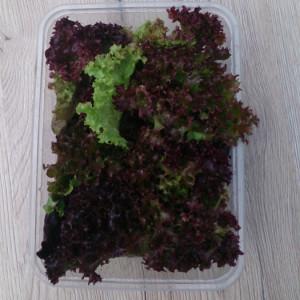 zioła-dla-gastronomi